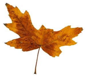 Podzimní ebook